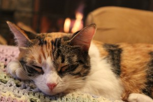 Cici sleeping by the fire